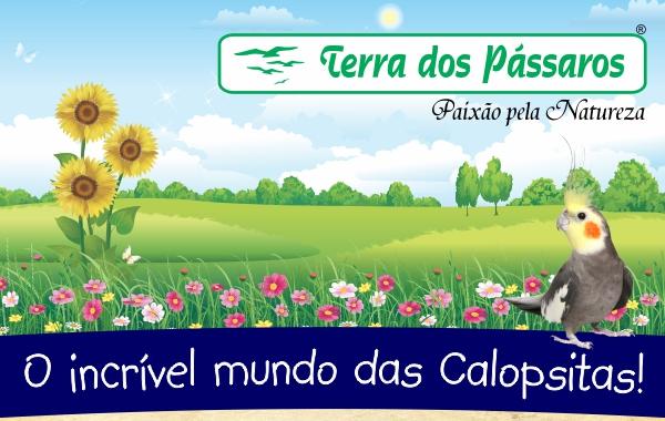 Mais de 150 produtos para Calopsitas